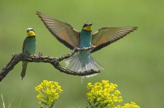 pticy para krylya vzmah vetka cvety 55885 1280x720 335x220 - Сонник бачити себе дзеркалі